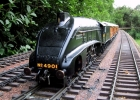 Capercaillie LNER A4